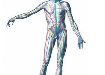 筋膜リリースとトリガーポイント